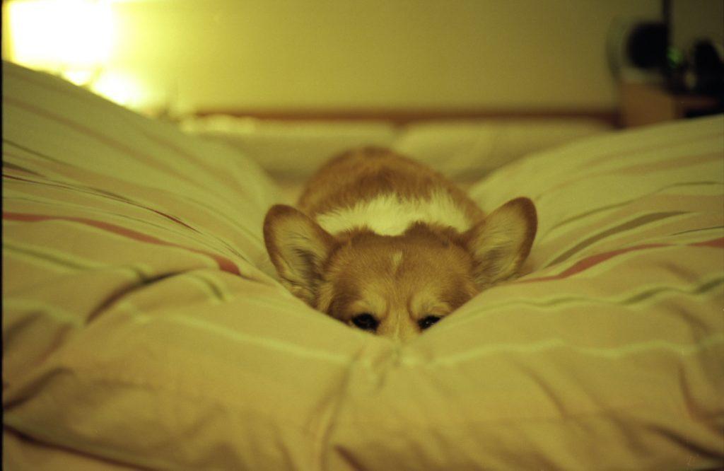 Bored dog waiting